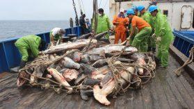 """Parques marinos de papel: flota de 300 naves chinas sorprende a Chile sin plan para controlar """"in situ"""" la pesca ilegal"""