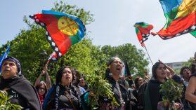 Un viaje a la libertad en La Araucanía