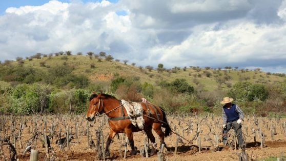 Pobreza y desarrollo rural: la oportunidad que ofrece la discusión constitucional