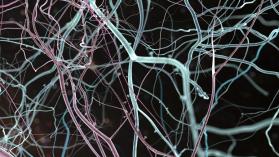 ¿Neuroderechos? Razones para no legislar