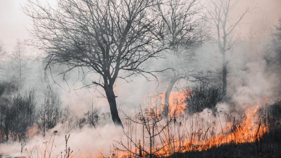 Sequía, plantaciones e incendios: la trilogía que puede ahumar la fiesta