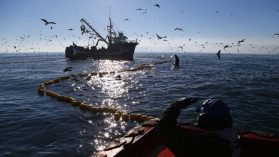 Urgencia máxima para nueva Ley de Pesca: solo limita a 20 años licencias perpetuas