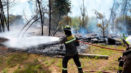 Después de los incendios: el real desafío de la restauración ecológica en Chile