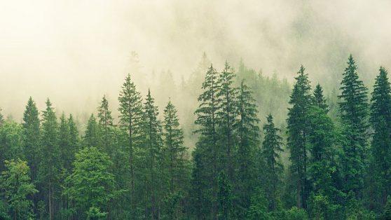 Debate sobre plantaciones forestales: el agua nos divide, el fuego nos une