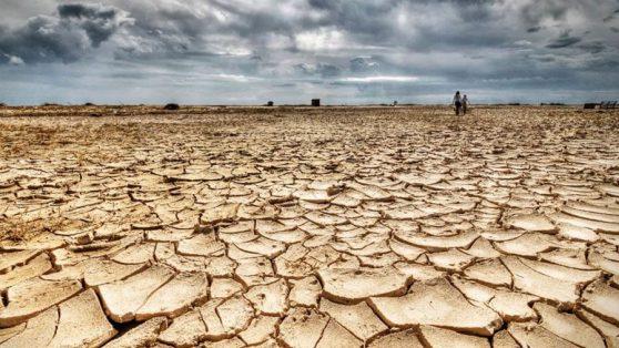 El avance de la desertificación: las 22 mil hectáreas de bosque nativo que CONAF aprobó talar sin reforestar