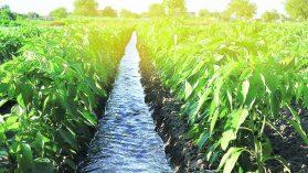 """""""En Chile, la agricultura tendría que funcionar con la mitad del agua que usa actualmente"""""""