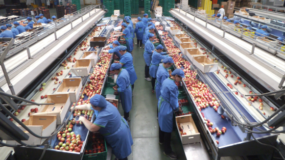Jornada laboral: la farsa detrás de flexibilización y productividad