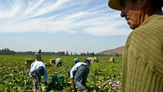 Fiscalía investiga denuncia de trabajo forzado masivo de inmigrantes en cosecha de arándanos y mandarinas