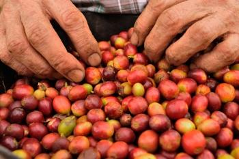 La agonía del café colombiano
