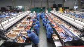 La epidemia del empleo precario: causas y posibles salidas