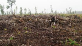 Empresa de la Universidad de Harvard es procesada por tala ilegal de bosque nativo en Chiloé