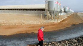 Detectan alto nivel de mercurio en agua destinada al consumo de los cerdos de Agrosuper en Freirina