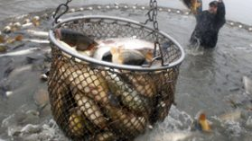 Ley de Pesca: pagos ilícitos a parlamentarios no serán investigados por la FAO