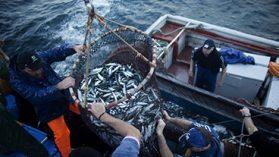 Las evidencias de los pagos políticos de las pesqueras del sur